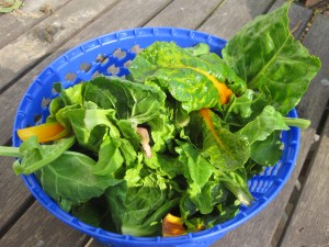 A Salad Spinner with Chard and Spinach