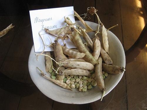 Magnum Bonum Peas