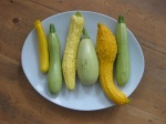 Summer Squash and Courgettes