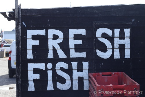 Fresh Fish Sign_Hastings 2