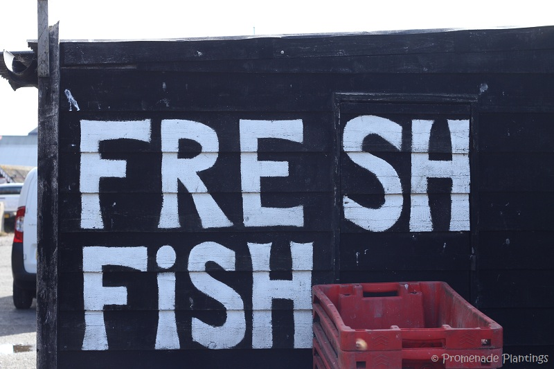 Fresh Fish Sign_Hastings