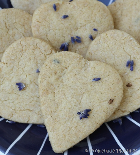Lavender_Shortbread (4) - Copy