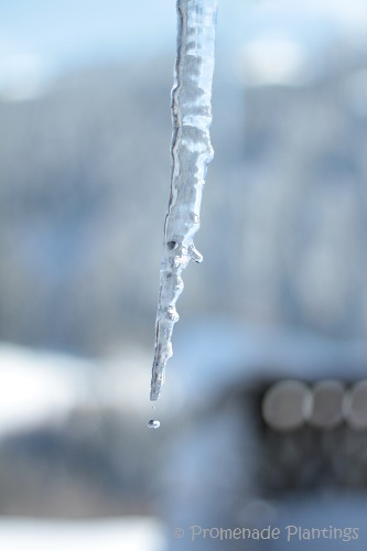 Icicle Forming (1)