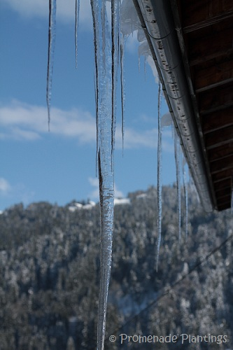 Icicles (2)