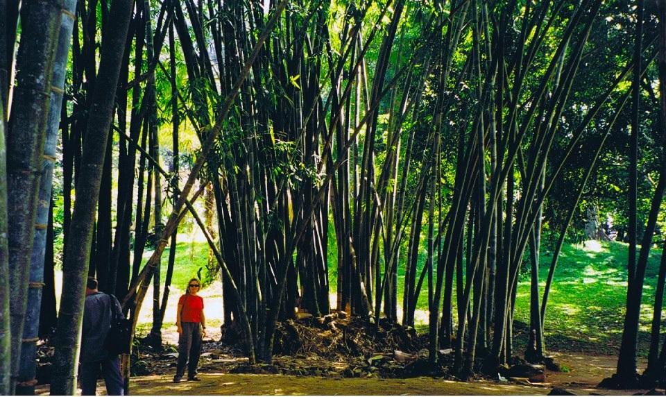 Bamboo_Claire_SrLanka