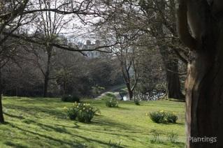 Park vview