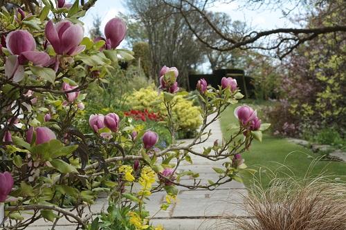 Magnolia (1a)