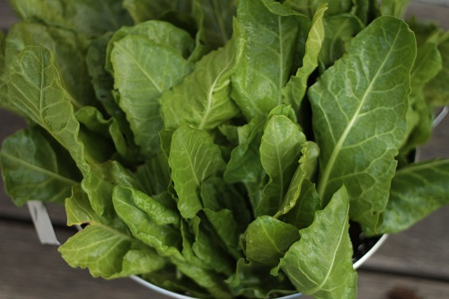 Spinach and Chard (1)