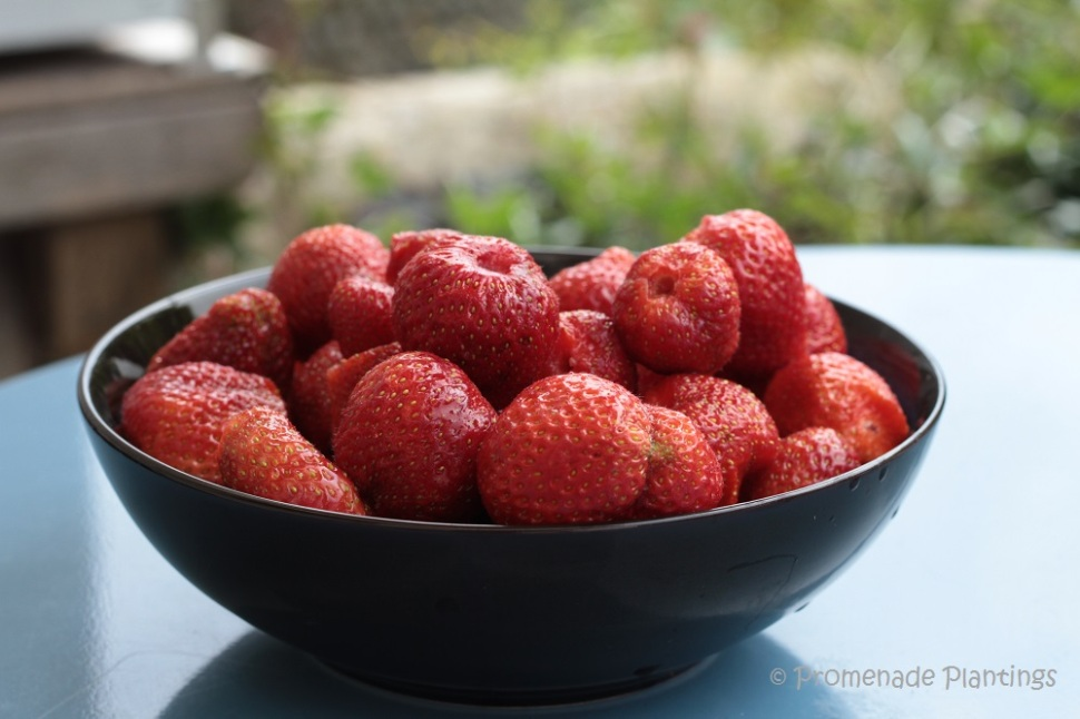 06_29_Strawberries (1)