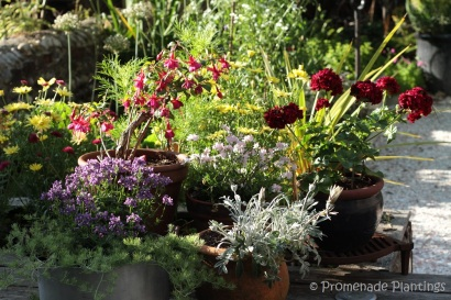 July flower pots