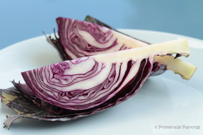 Red Cabbage sliced (2)