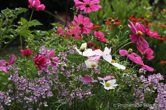 An english country cottage garden promenade plantings for Flowers and gardens pictures