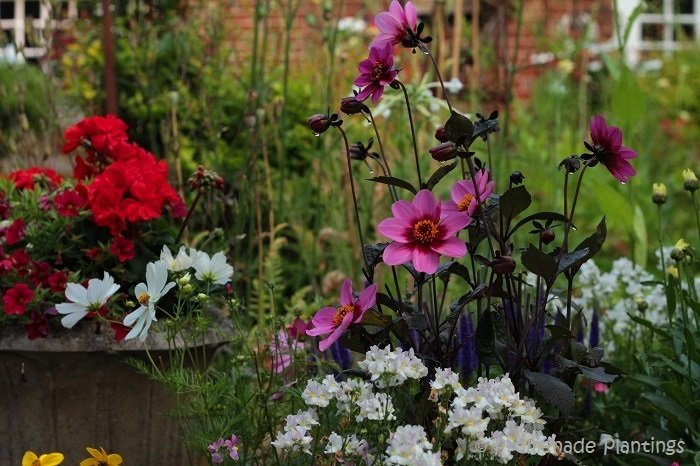 Cottage Garden Flowers (2)