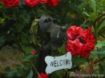 Welcome Dog