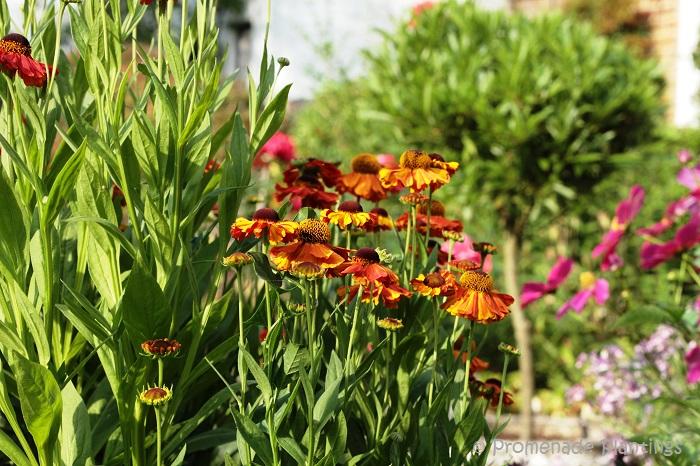 Use _Garden Path