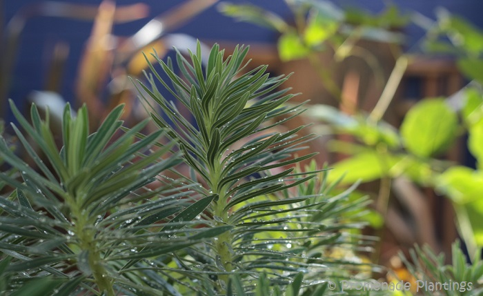 Garden Greenery (4)