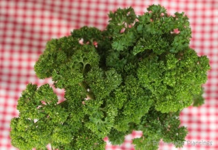 Curly Parsley (3)
