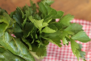 Parsley and Chard