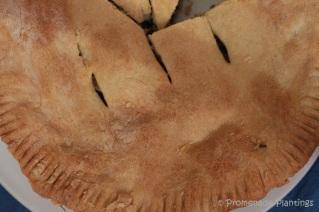 Ligurain Italian Chard Pie (13)