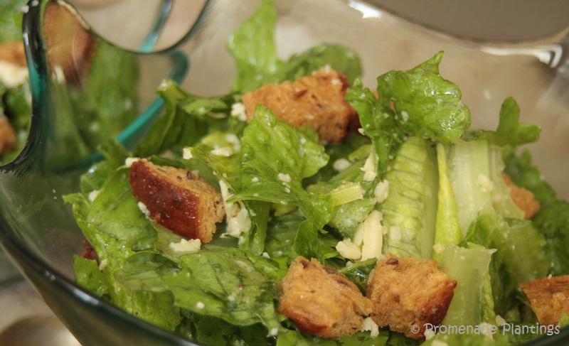 USE_Caesar Salad (2)