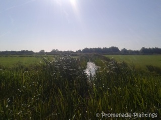 Pevensey Walk